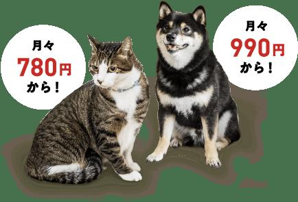 猫は月々780円から!犬は月々990円から!